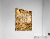 Jagged Gold  Acrylic Print