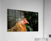 You Turkey  Acrylic Print