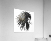 The Muse  Acrylic Print