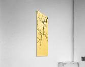 Plum Blossom Twig - Yellow  Acrylic Print