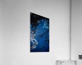 KIMG4119  Acrylic Print