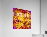 Dragon  Acrylic Print