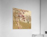 PInk Magnolia Tree  Acrylic Print