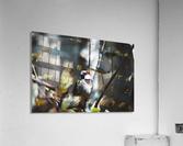 DSC_1735  Acrylic Print