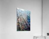 Hope Shines With The Sun  Acrylic Print