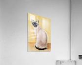 img 20200606 164158 1_QGF7qH1i (1)  Acrylic Print