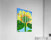 Sweet Song of Summer  Acrylic Print