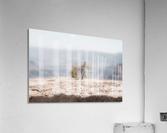 Desert Shrub Grand Canyon 2  Acrylic Print