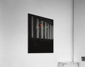 RASPBERRY PUG_COLOR PENCIL_51X69.30  Acrylic Print