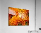 Fluffy Yellow Sunflowers  Acrylic Print