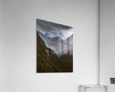 Between the trees  Acrylic Print