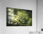 Green as the fern   Acrylic Print