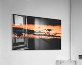 Heron hunt  Acrylic Print
