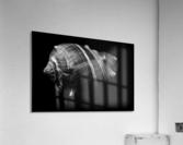 Series of shells  Acrylic Print