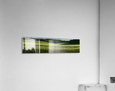 Wheat Fields  Acrylic Print