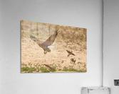 AdriaanPrinsloo 7140 2  Acrylic Print