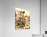 AdriaanPrinsloo 6659  Acrylic Print