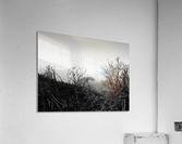 California Clouds through Mountain Brush in B&W  Acrylic Print