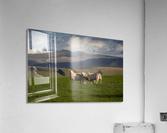 Sheep on the Brecon Beacons  Acrylic Print