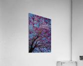 Joy of Life - 01  Acrylic Print