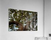 Resilience - width  Acrylic Print