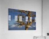 Renewal  Acrylic Print