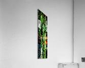 Neon Black Velvet Cactus 1  Acrylic Print
