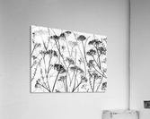 Silhouette of dried plants  Acrylic Print