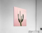 Cactus plant  Acrylic Print