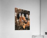 Spirit of Ancestors Horse  Acrylic Print