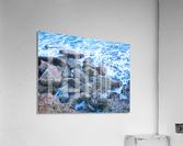 Rugged Coast  Acrylic Print