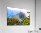Wild Kauai 3  Acrylic Print