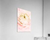 Daltana Spring Brill  Acrylic Print