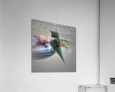 Colibris  Acrylic Print