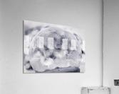 Givre  Acrylic Print