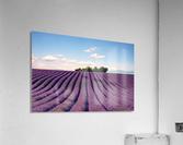 The Valensole plateau  Acrylic Print