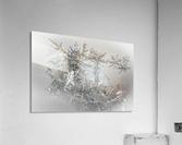 Pointe  Acrylic Print