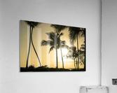 Through the Palms  Acrylic Print