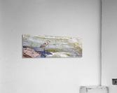 Great Blue Heron ap 2014  Impression acrylique