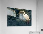 Great White Egret ap 1839 B&W  Impression acrylique
