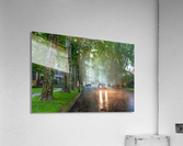 Summer Rain ap 2892  Acrylic Print