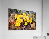 Flowers ap 2222  Acrylic Print