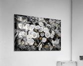 Flowers ap 2222 B&W  Acrylic Print