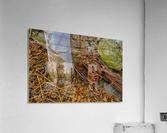 Barn Trolley ap 2241  Acrylic Print