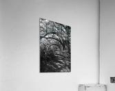 Nature Trail ap 2081 B&W  Acrylic Print