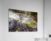 Moss   Lichen ap 2294  Acrylic Print