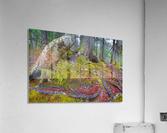 Moss   Lichen ap 2196  Acrylic Print