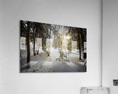 Sunlight ap 2731  Acrylic Print