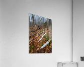 White Birch ap 2186  Acrylic Print