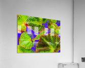 Tropical Colours  Acrylic Print